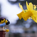 Shooting the flowers of spring [Legographer] | 67/365 | 2014 by @Dave
