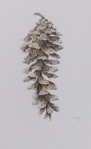 Pinus strobus ~ white pine cone by Art by Cheryl