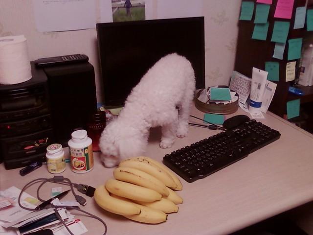 개와 바나나가 있는 정물