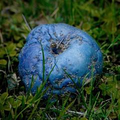 La Terre est bleue comme une pomme / The Earth is blue as an apple