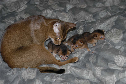 catalina+babies2
