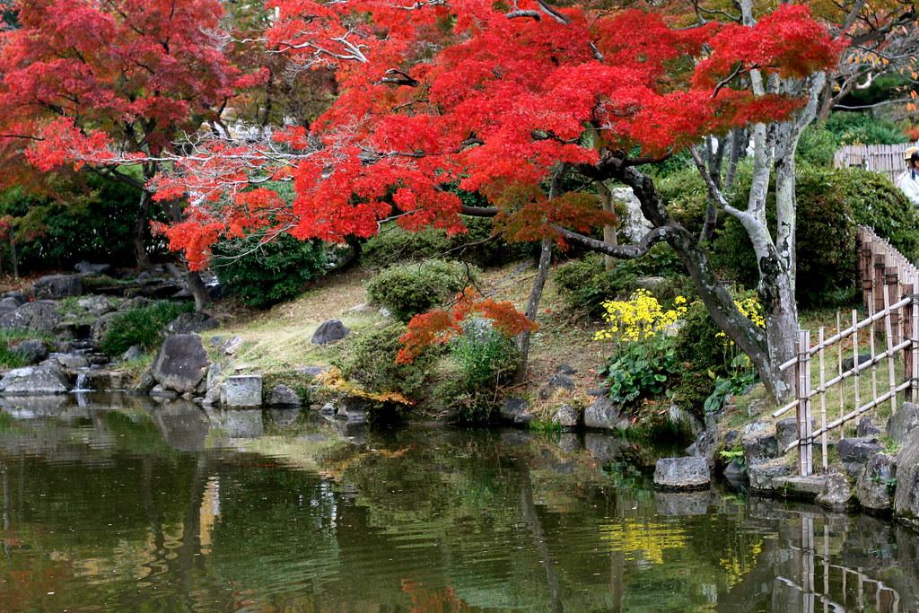Amazing Leaves