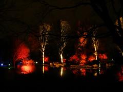Magic Lake Night Lights