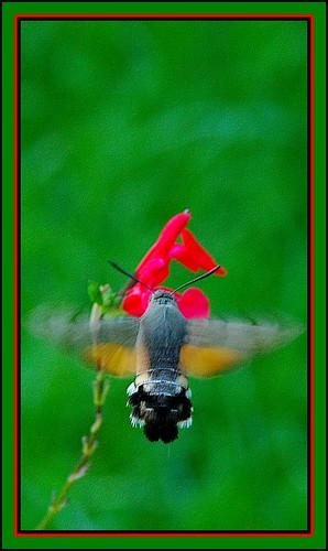 Battements d'ailes...