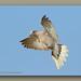 NL8A7159_120dpi by butchramirezphotography