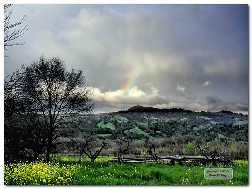 california wild cloud mountain storm color grass northerncalifornia clouds landscape outdoors shower spring rainbow country meadow meadows dramatic gimp olympus wildflowers drama hdr stormclouds springtime wildmustard geyserville olympusc3000z c3000z geyservillecalifornia glixpix kevindrenz kevinrenz kdrenz