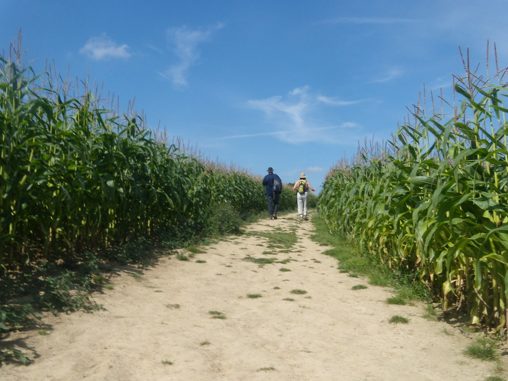 Through maize Cowden to Hever