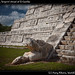 Chichen Itza, Serpent'shead of El Castillo