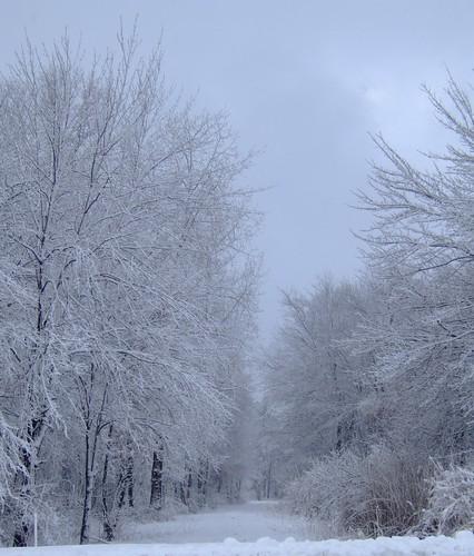 winter snow landscape cromwellhighschool 06416