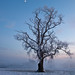 Farnham Estate Winter-5