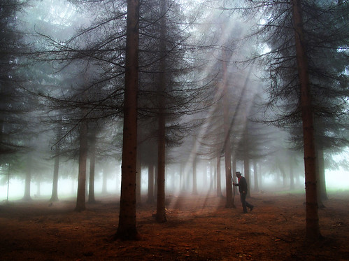 Uros Petrovic - Walking Through Magical Forest