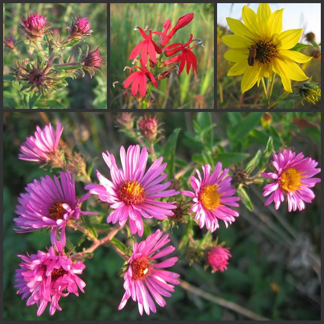 Indiana Native Plants: Native Indiana Wildflowers
