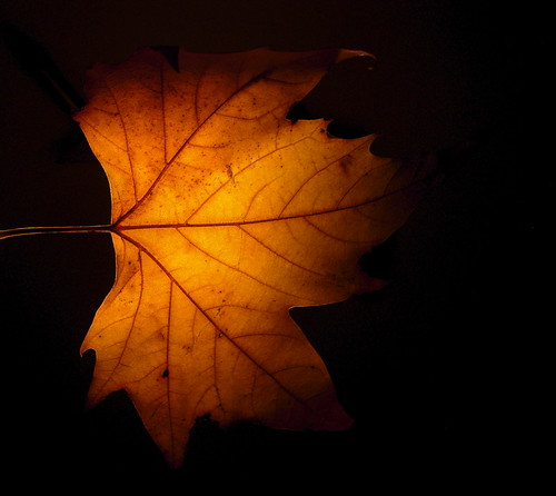 autumn leaf in golden   light