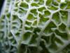A kelkáposzta termesztése