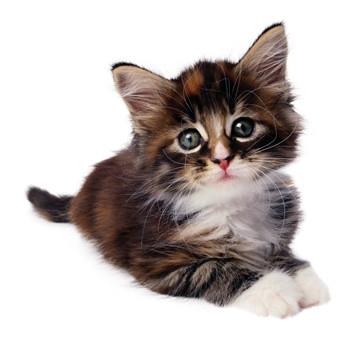 Cute,,,Cat...