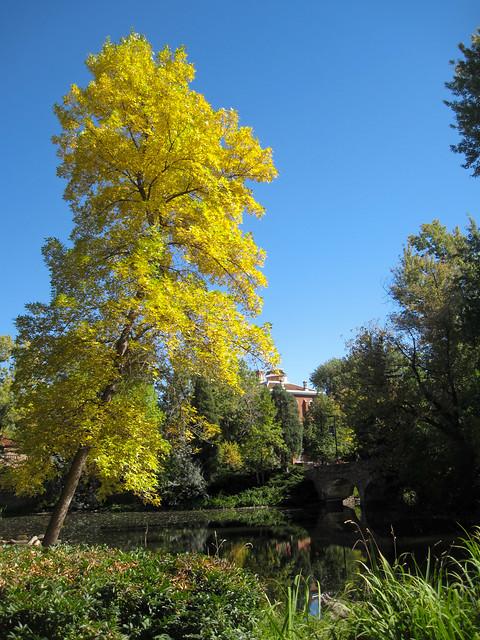 Varsity Lake Fall Colors