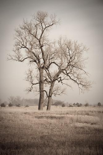 tree green nature field oak nikon scenery natural scenic prarie joemurphy switchgrass josephlmurphy jmurphpix countrysideforestcityphotoslandscape