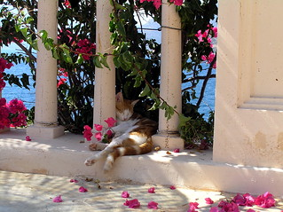 Smooth Siesta at Kalkan Turkey