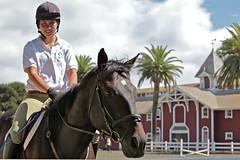 animal sports, equestrianism, english riding, eventing, dressage, stallion, equestrian sport, sports, horse,