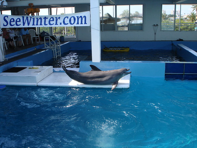 Clearwater Aquarium Flickr Photo Sharing