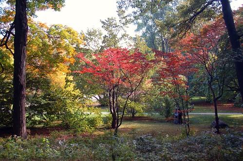 Arnold Arboretum: Reddening fall foliage