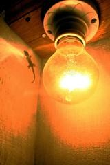lamp(0.0), still life photography(0.0), darkness(0.0), lantern(0.0), incandescent light bulb(1.0), light fixture(1.0), yellow(1.0), light(1.0), amber(1.0), macro photography(1.0), lighting(1.0),