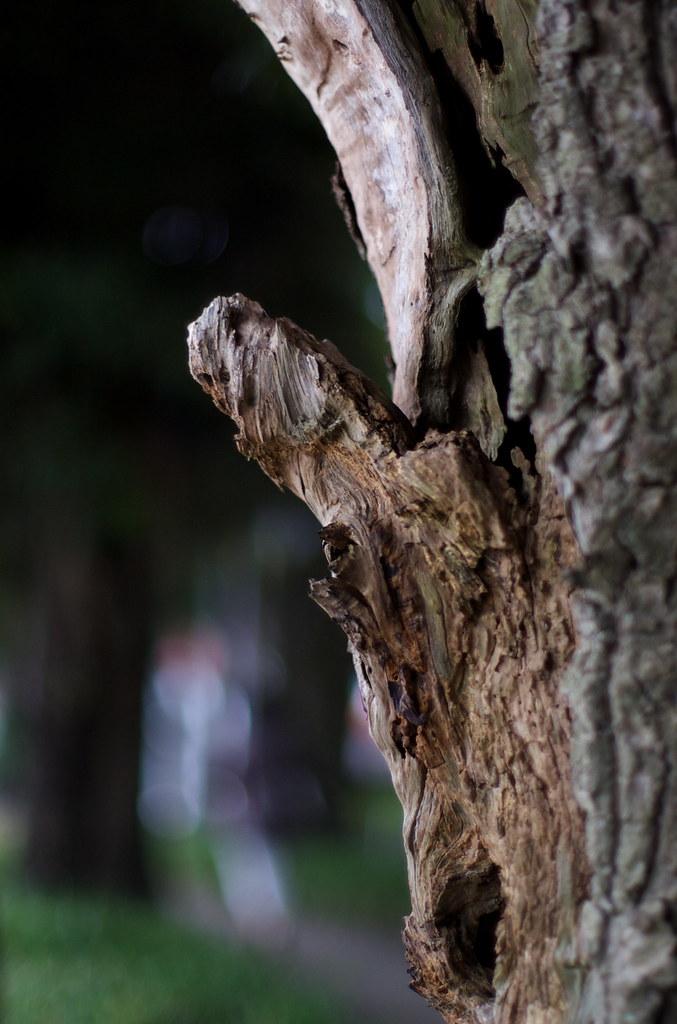 木の幹 2009/09/03 DSC_3801