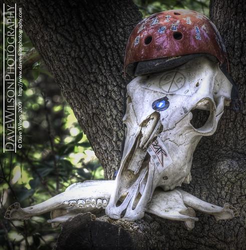austin skull bmx track texas tx helmet explore bones walnutcreek hdr
