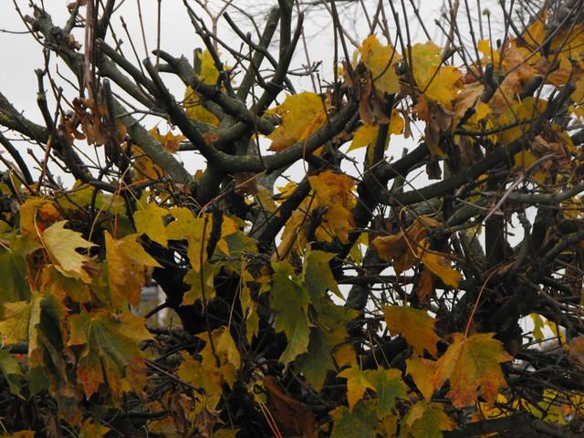 Herfst bij de driesprong zoetermeer herfst bij de for Driesprong zoetermeer