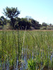 "<a href=""http://www.flickr.com/photos/godutchbaby/4126763863/"">Photo of Demansia olivacea by dutchbaby</a>"
