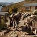 Donkeys Returning Home - Isla del Sol, Lake Titicaca, Bolivia