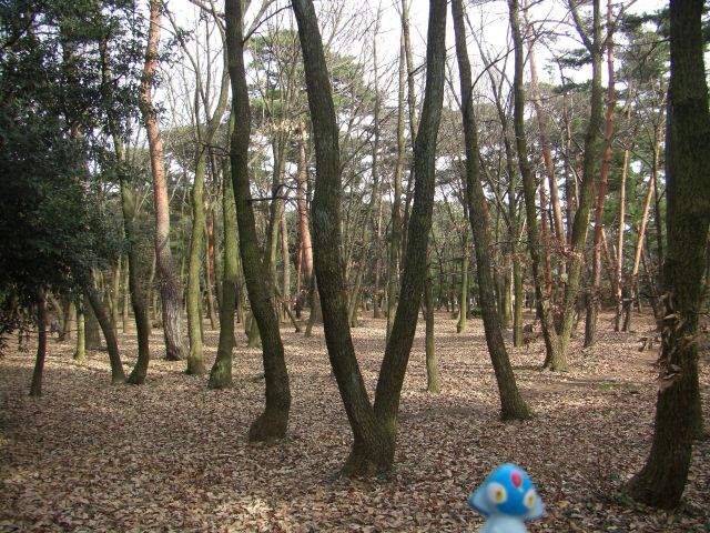 Kameyama-shi Japan  city images : Azelf in Tsuruga, Fukui 16 Kehi Pine Grove | Flickr Photo Sharing!