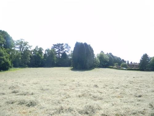Mayfield hayfield