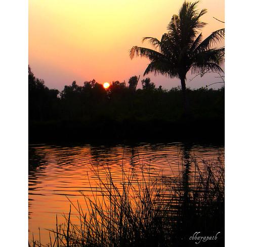life sunset sky orange sun black color reflection tree love water colors grass silhouette gold golden you ripple silhouettes wave end bangladesh bangla sundarbans chhayapath