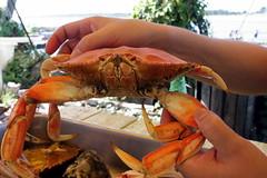 lobster(0.0), fish(0.0), food(0.0), american lobster(0.0), crab(1.0), animal(1.0), shellfish(1.0), crustacean(1.0), seafood(1.0), invertebrate(1.0), dungeness crab(1.0), king crab(1.0),