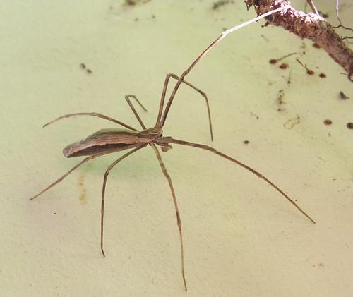 Comment radiquer une infestation d araign es dans la for Araigne sauteuse maison