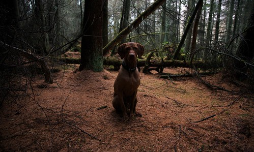 Mako loves the forest...