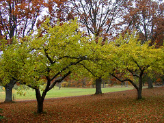 Beech- and appletrees