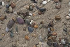 Cape Cod Environments