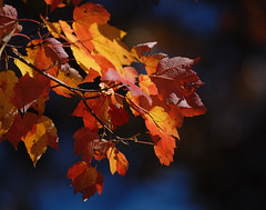 Leaves: Observations and experimentation