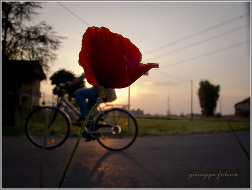 road street sunset sky verde green canon evening strada tramonto silouette cielo bici rosso prato controluce sera bicicletta g12 papavero giusfido63