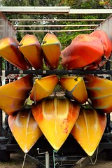 Palm Cove Kayaks