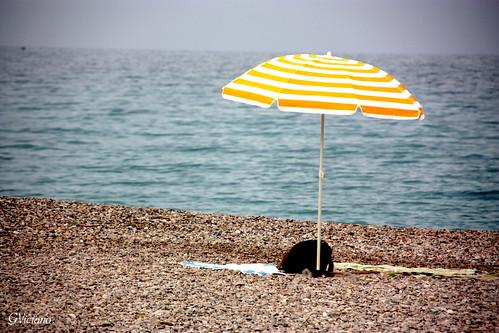 Llegó el verano - Summer is here