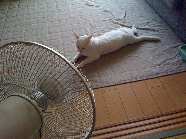 Come aiutare i gatti a sopportare il caldo estivo