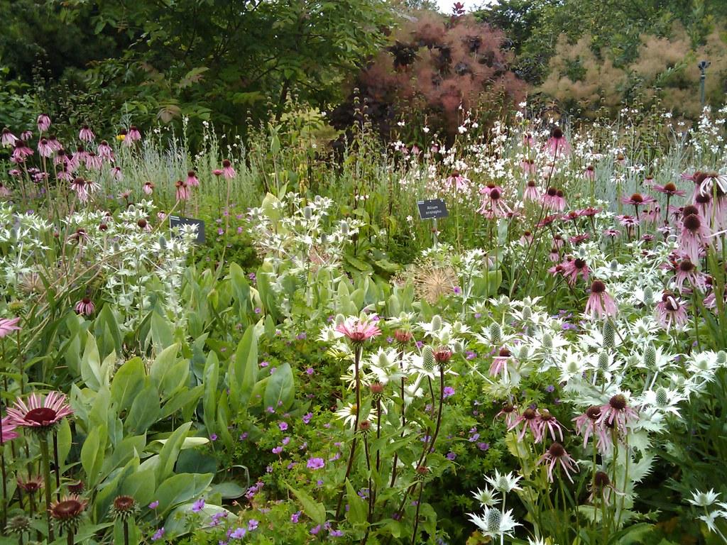 Piet oudolf border rhs tuin wisley wisley juli 2009 for Piet oudolf pflanzen