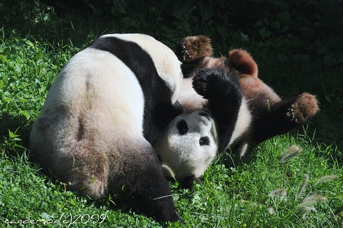 Mei has Tian Down For The Count!