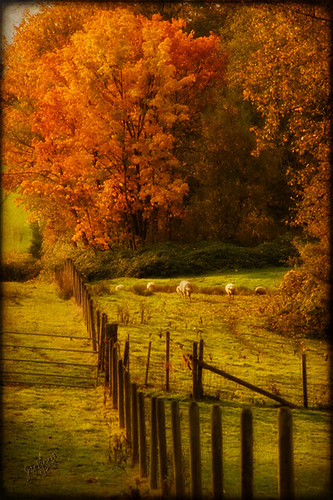 Autumn Graze