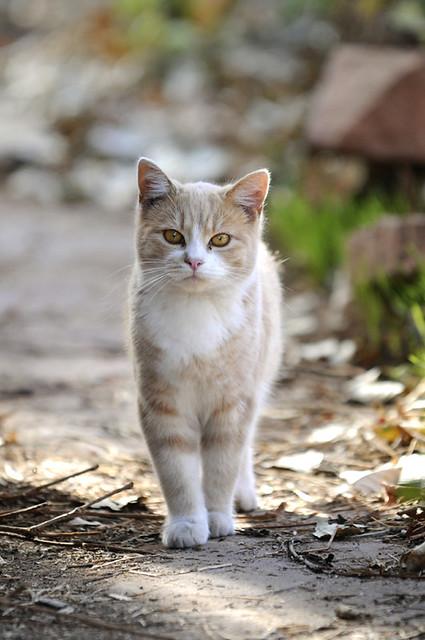 stray cat flickr   photo sharing