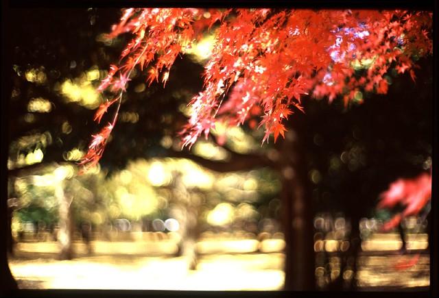 20091123_0610_CanonL50(m)_M6_YoyogiKouen_Tokyo