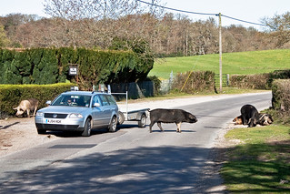 Road Hogs - 1